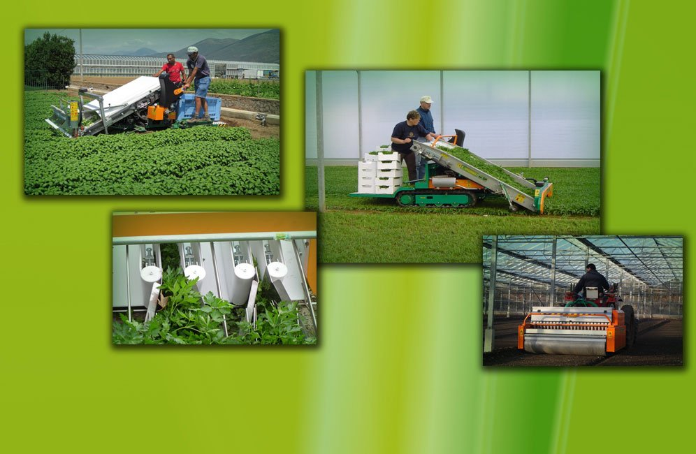 Machineries for spinach, rocket, baby leaf & herbs
