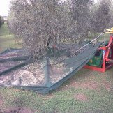 Umbrella for collecting olives and other fruits