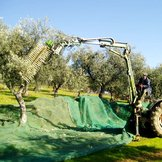 VIBRATING COMB FOR OLIVES